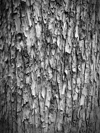 Close to you Hugging A Tree Taking Photos IPhoneography Close Up Close Up Photography Close-up Close Up Nature Tree The Places I've Been Today Eyem Nature Lover Pattern Pieces Pattern, Texture, Shape And Form
