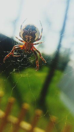 природа🍃 паук паутина лето деревня каникулы