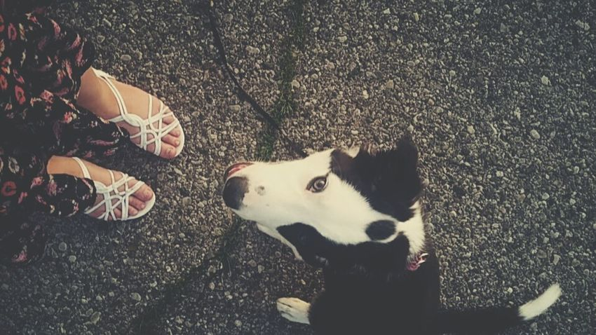 Feet Sandals Embers Pets Puppy Border Collies Animals Legs Foot Pets Too Cute