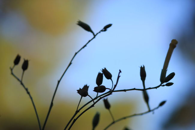 Morning Light Morning Colours Nature Plant Close-up Flower No People Uncultivated Outdoors Beauty In Nature Sky Day