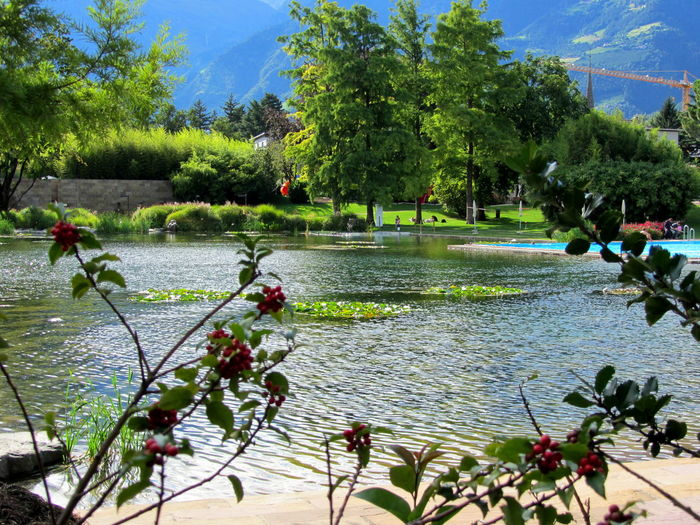 Secret pond on a beautiful sunny day Brook Creek Current Foliage Foothill Foreshortening Garden Green Hidden Hill Hills Horizontal Landscape Marsh Mountainous Mountains Mountainside Natural Outdoor Outdoors Outside Park Peaceful Peak Water