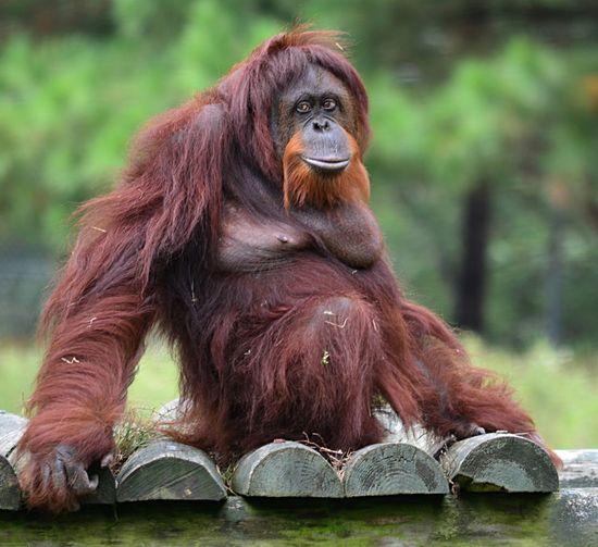 Monkey Sitting On Wooden Fence