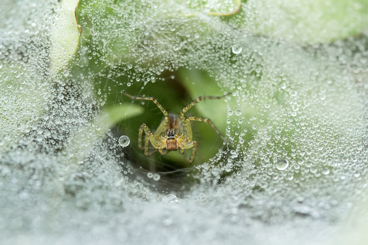 Spider on dew