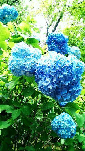 嵐山 Flowers Hello World