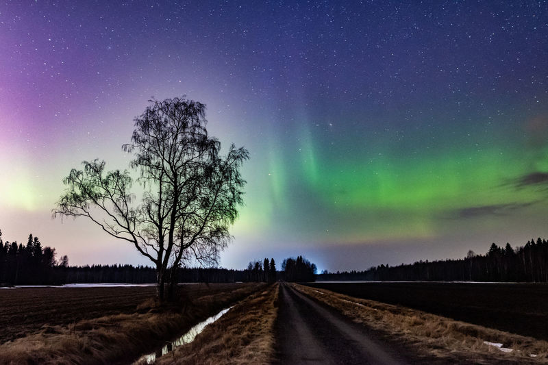 Sky Scenics - Nature Beauty In Nature Night Space Tree Star - Space Road Tranquil Scene Transportation No People Direction Plant Nature Tranquility Landscape Environment Astronomy The Way Forward Diminishing Perspective Outdoors Northernlight Aurora Polaris Beauty In Nature Tree Stars Nightphotography