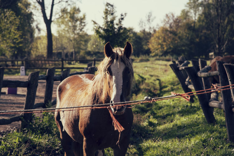 View of horse in field