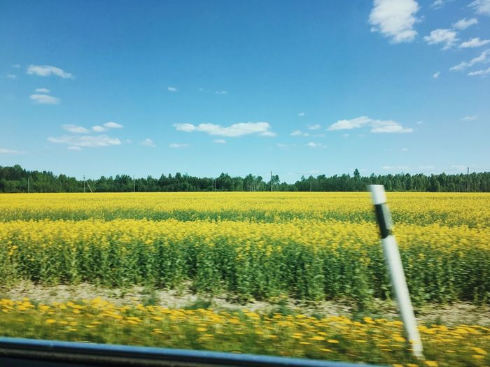 Summer Roadtrip Summer Visitestonia Plant Growth Yellow Beauty In Nature Field Sky Land Scenics - Nature Landscape Agriculture Oilseed Rape Cloud - Sky