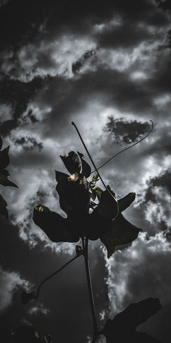Low angle view of silhouette flower against sky