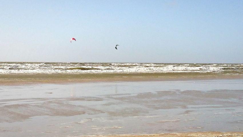 Beach Flying Bird Sea Sky Beauty In Nature Sunny Water Sand