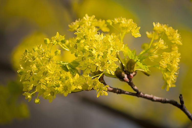 Beauty In Nature Blooming Close-up EyeEmNewHere Flower Nature No People Outdoors Plant Spring Spring Blooms Tree Yellow
