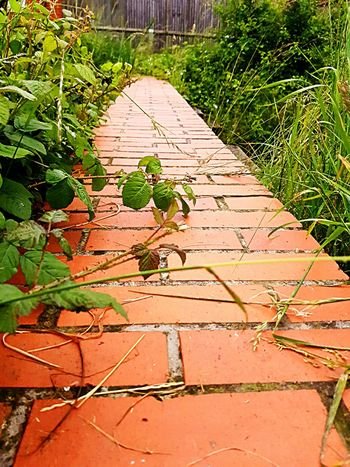 A seemingly dead end at the of this red bricked path..... Bricked Floor Follow The Yellow Brick Road Red Bricks Deep Colors No People Ashford Kent