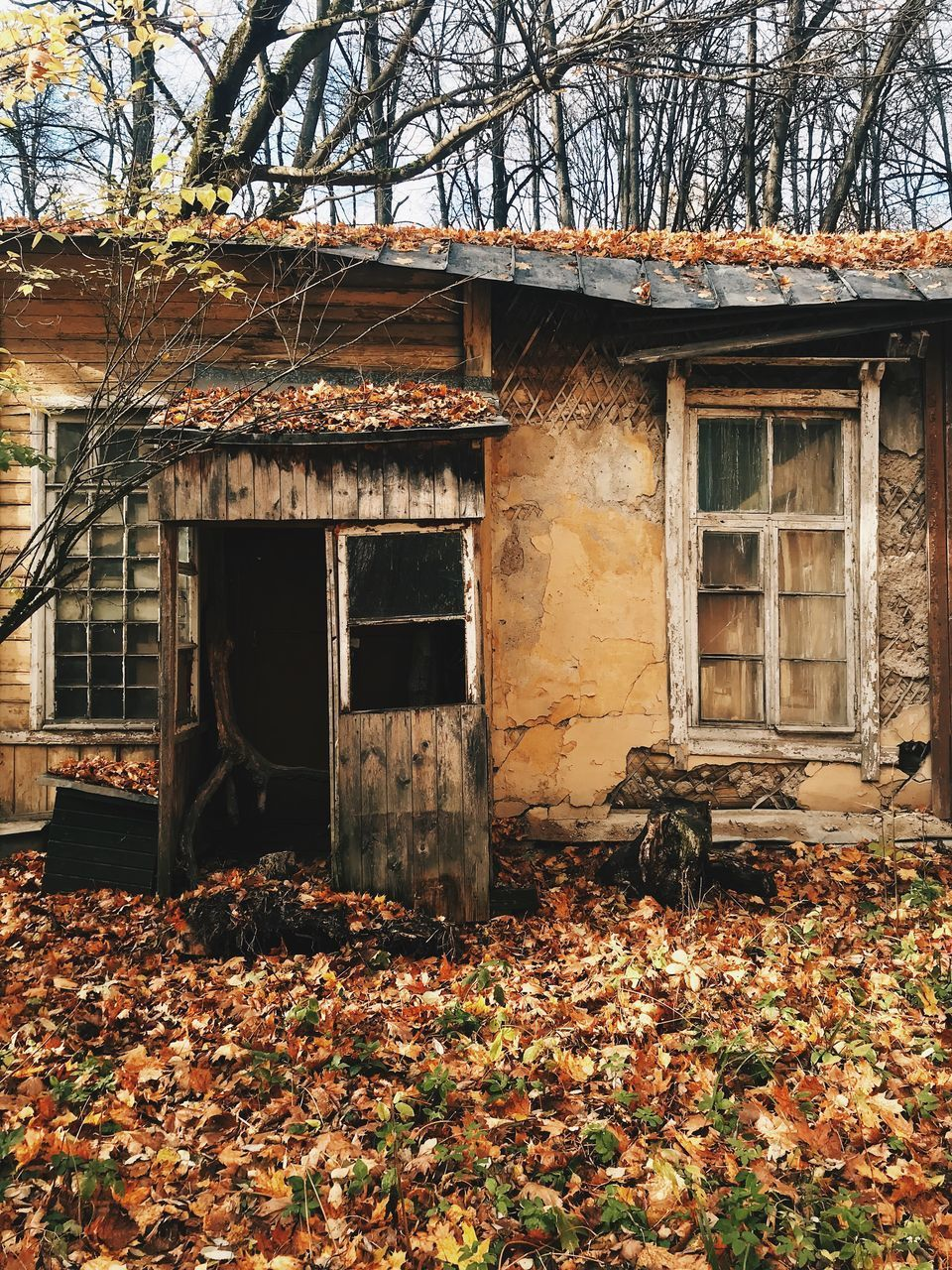 built structure, architecture, tree, building exterior, plant part, building, change, plant, leaf, autumn, nature, no people, day, house, abandoned, outdoors, residential district, old, falling, entrance, leaves