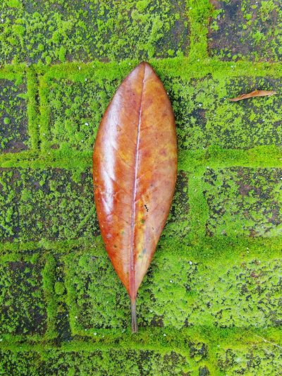 Grass High Angle View Leaf Green Color No People Nature Outdoors Close-up Beauty In Nature Freshness Day Urban Life City Life Growth Textured  Brick Moss