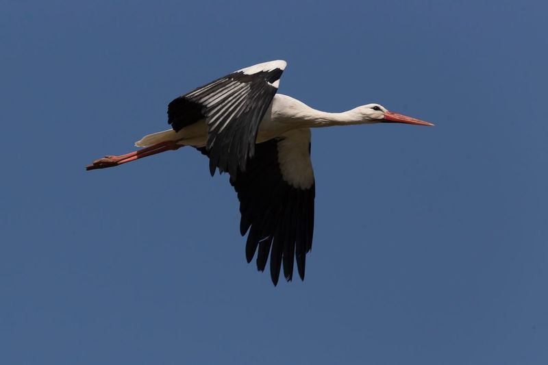 Stork EyeEm