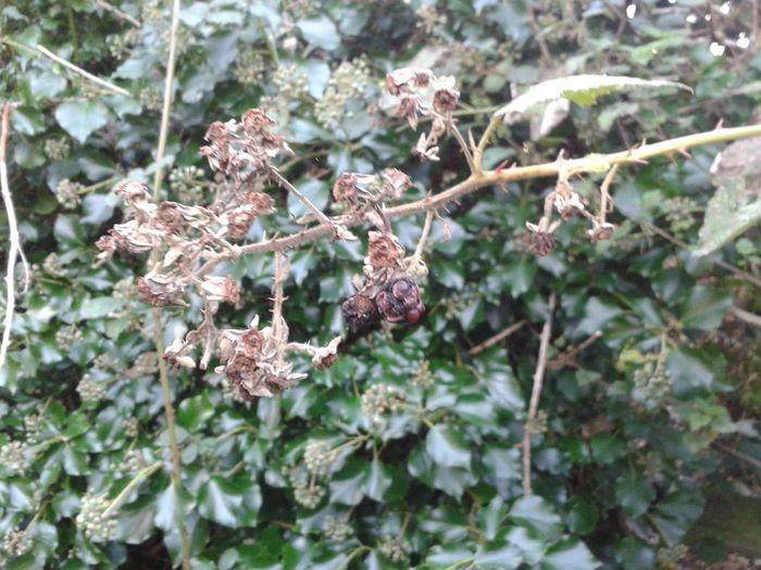 Nature Autumn Razorspics Stinger11th