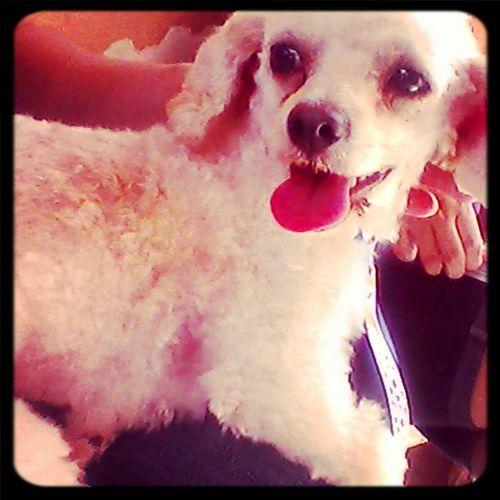 caozinho.. haaha melhor Amigo. my Dog