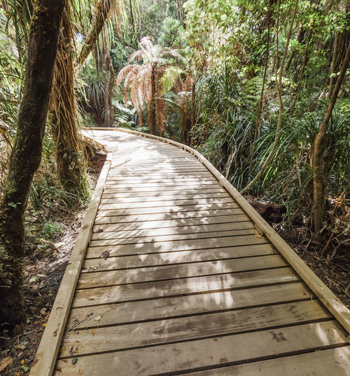 Boardwalk in dense forest - Waipoua Forest, Northland, North Island, New Zealand Exploring Hiking New Zealand Scenery Path Waipoua Forest Wanderlust WoodLand Beauty In Nature Boardwalk Diminishing Perspective Direction Elevated Walkway Fern Footpath Forest Hiking Trail Lush Foliage New Zealand No People Pathway The Way Forward Trail Walkway Wood - Material Woods