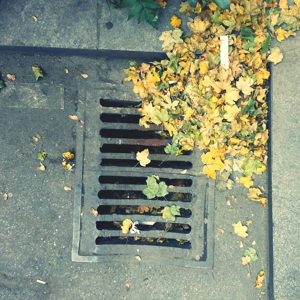 High Angle View Of Leaves By Sewage