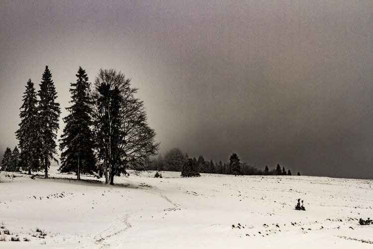 a few shots from a trip to the mountains with a dog Snow Cold Temperature Winter Tree Plant Beauty In Nature Sky Tranquility Land Tranquil Scene Field Covering Nature Scenics - Nature Non-urban Scene No People White Color Environment Landscape Outdoors Pine Tree Coniferous Tree