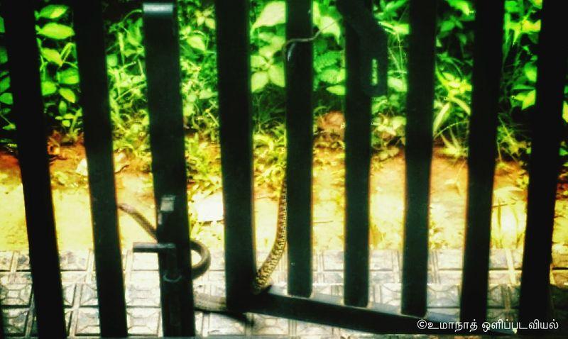 Snake Snakes Of Eyeem Snake Photography Snake ♥ Snakes EyeEmSelect EyeEm Nature Lover EyeEmNewHere EyeEm Best Shots EyeEm Gallery Eyeem Snake Snake Snakes Nature Gate Tree Shadow Sunlight Grass Close-up