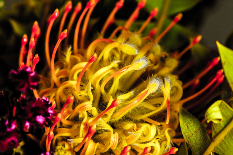 Close-up of yellow flowers at night