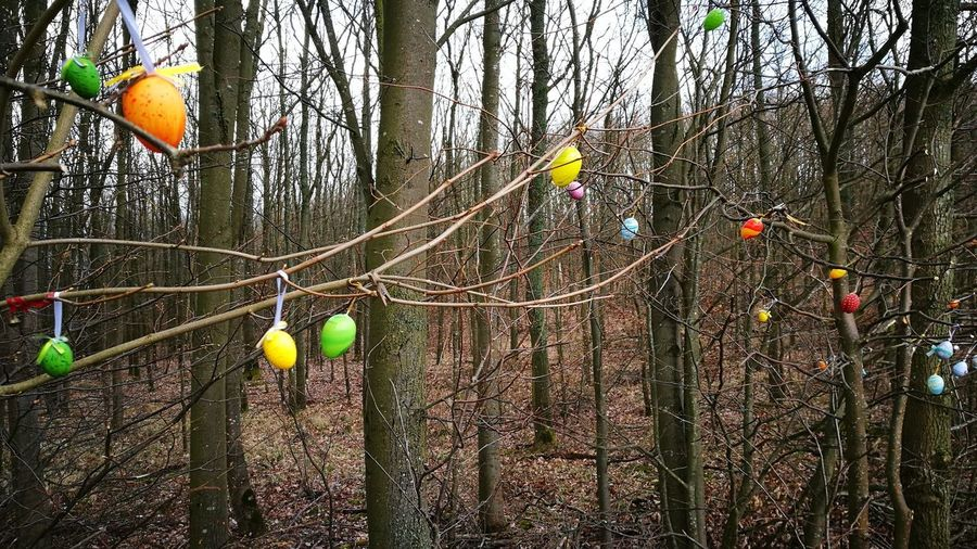 Low angle view of balloons on tree in forest