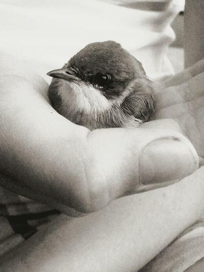Bird Enjoying Life Littlebird Lovely Oldphoto