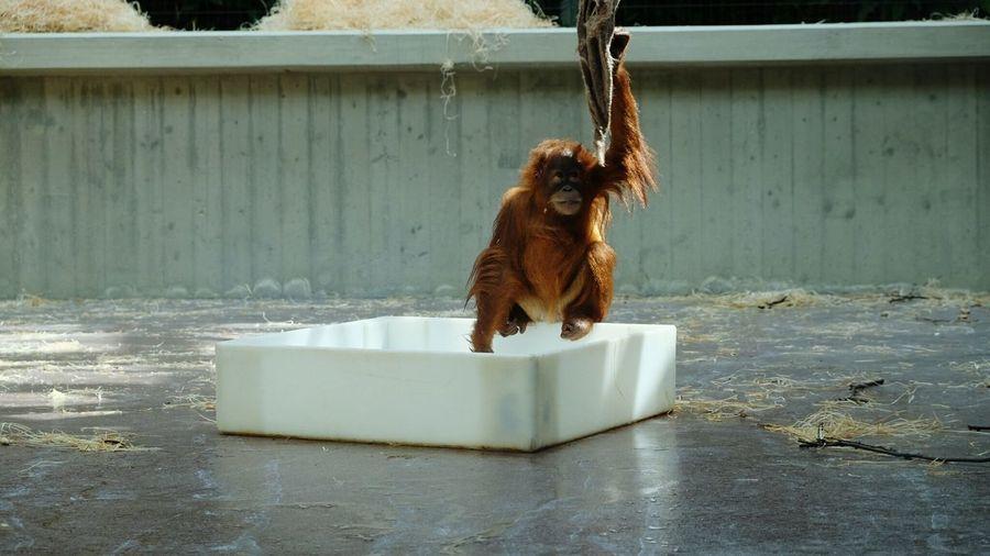 Monkey Zoo Basel Animal