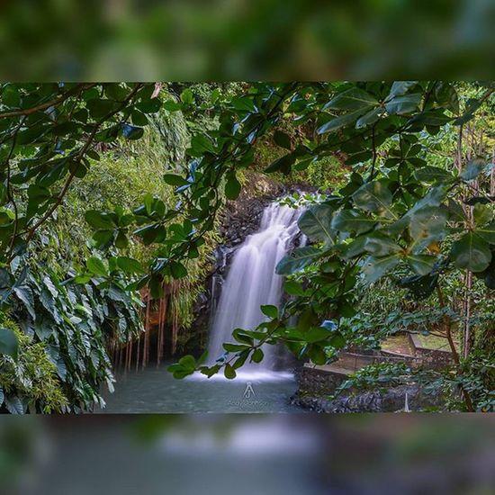 Grenada Ig_grenada IGDaily Loves_caribbeansea Nature_perfection Natureaddictsun Nature_sultans Ilivewhereyouvacation Islandlivity PureGrenada Golden_click Slowshutter Ig_caribbean Bush ChasingWaterfalls