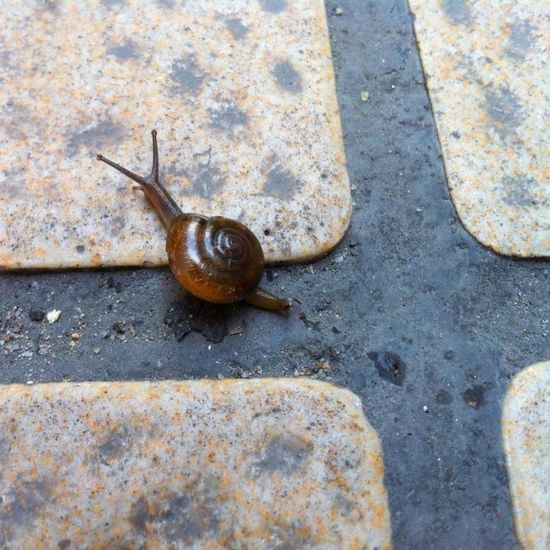 Close-up of snail on white surface