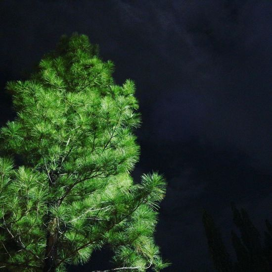 Outdoors The Week On EyeEm EyeEmNewHere Nature Green Color Night Tree Beauty In Nature Low Angle View No People Nightphotography Nightlife Nightsky