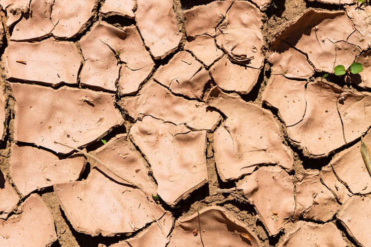 A shot of crusty, dry mud in Morocco. Climate Arid Climate Cracked Dry Drought Full Frame No People Land Nature Day Pattern Scenics - Nature High Angle View Dirt Field Close-up Backgrounds Environment Barren Mud Disaster Global Warming