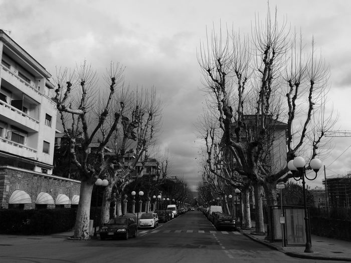 Tree Outdoors City Sky Day No People Street Tranquil Scene Cloud - Sky Simmetry