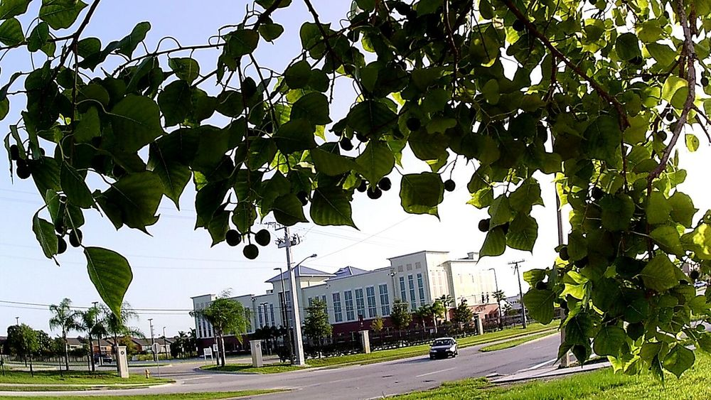 Streetphotography Collegecampus