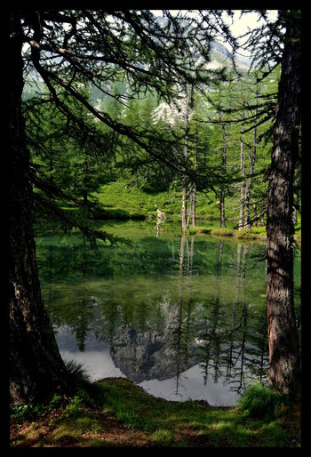 Alpe Veglia Beauty In Nature Calm Green Green Color Idyllic Lake Lakeshore Mountain Nature Reflection Tranquility Tree Water Landscape Landscapes Mountain Lake Natural Photography Trees Pinetrees Reflections Travel Travel Photography Branches Colour Of Life