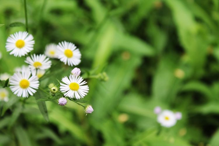 Beauty In Nature Blooming Close-up Day Flower Flower Head Fragility Freshness Green Color Growth Nature No People Outdoors Petal Plant