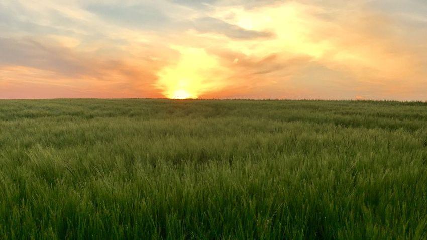 Malerische Ansicht eines Feldes im Sonnenuntergang kurz vor zu Hause Agriculture Beauty In Nature Field Landscape Nature No People Outdoors Sky Sunset Tranquility
