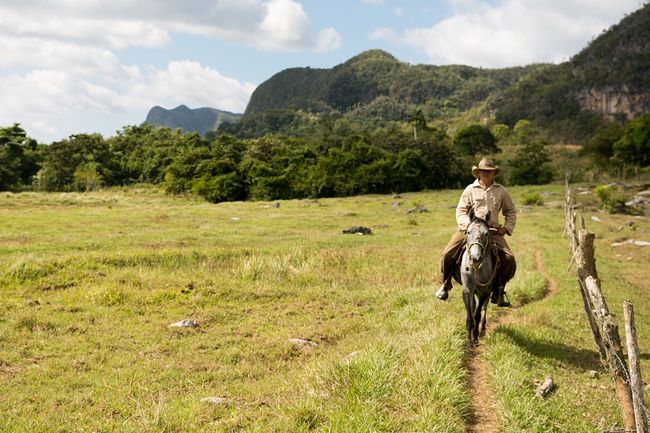 Cuban Cowboy Real People One Person Tree Nature Grass Field Green Color Landscape Beauty In Nature Horse Cowboy Cowboy Hat Riding EyeEmNewHere