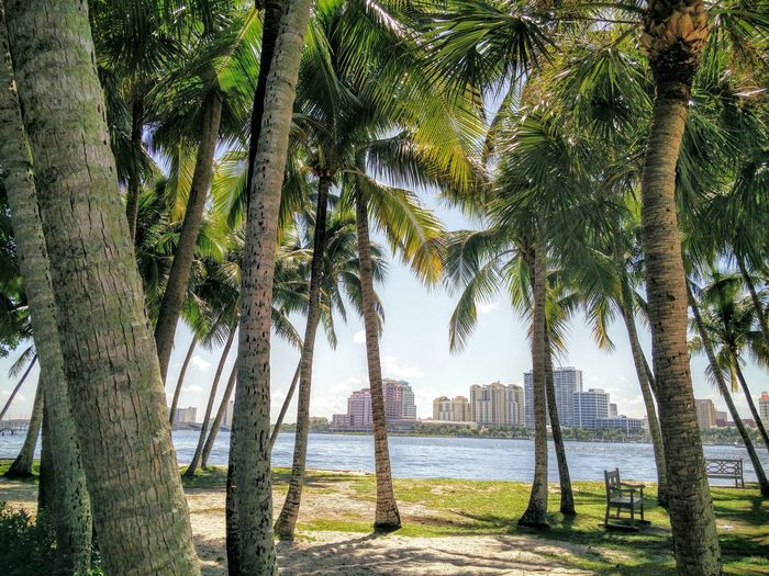 Cityscapes West Palm Beach Seaside Shoreline Palm Trees Green Color Tranquility Tranquil Scene Travel Destinations Water Nature Day Treelined Scenics Walkway Outdoors Seaside Seats Bench With A View Florida Life Summer Waterside Chilling. Florida Beauty Sunny Day Treelined Palm Tree
