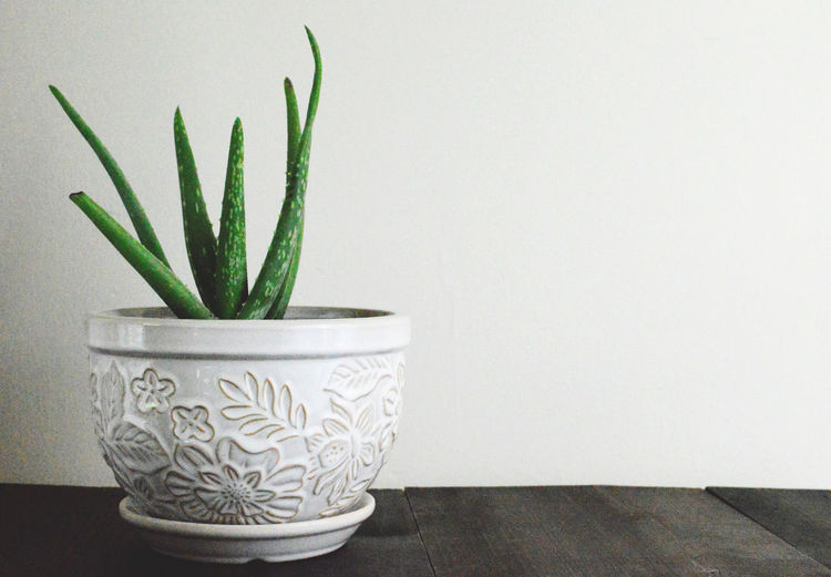 Close-Up Of Potted Plant On Wooden Table Against Wall