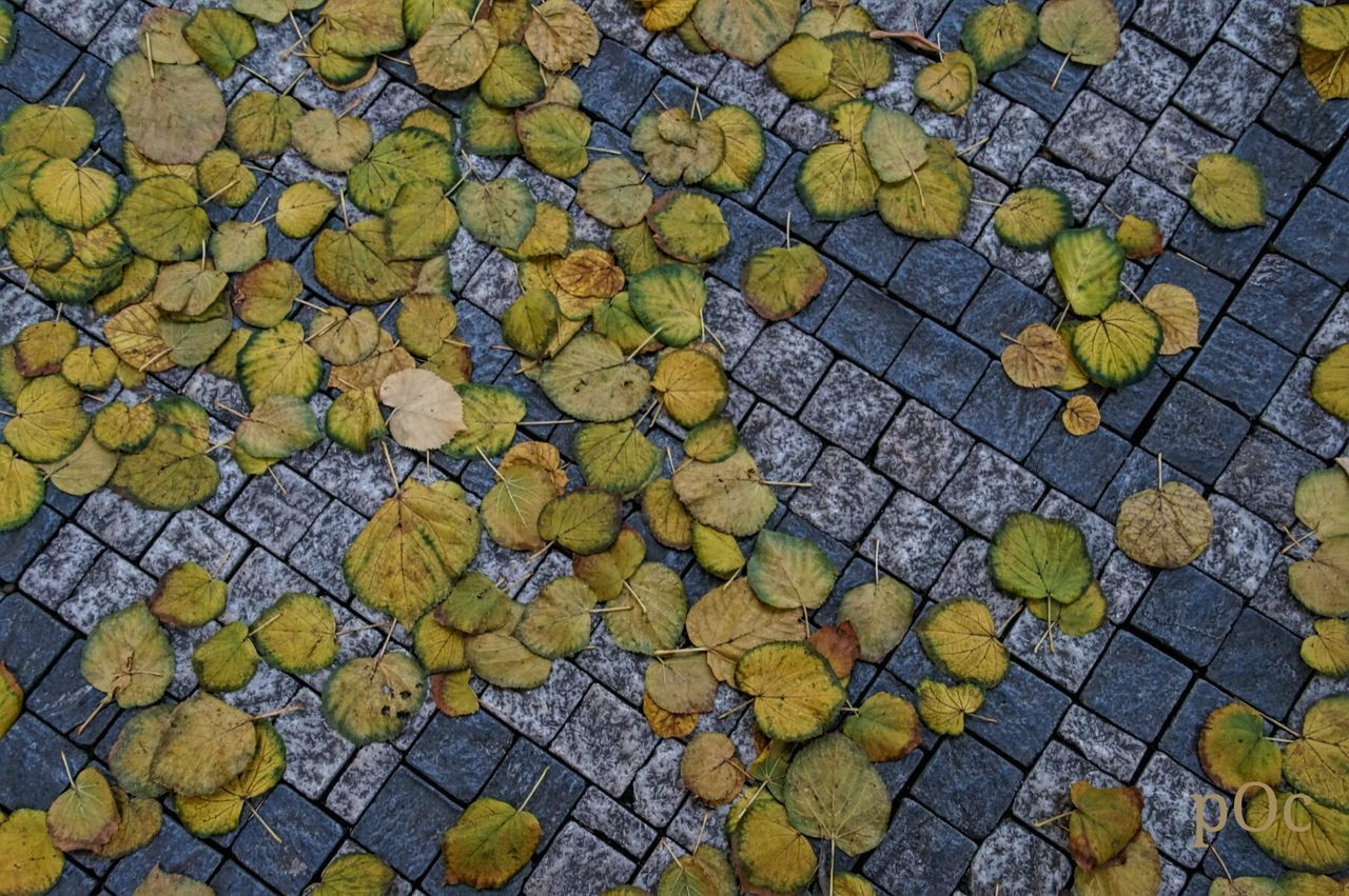 cobblestone, leaf, autumn, high angle view, outdoors, day, stone tile, paved, street, yellow, no people, full frame, change, nature, backgrounds, close-up