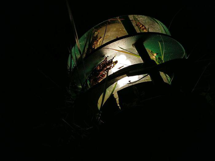 OnePlus 3 Bulb Lamp Light Garden Eyem Market Eyem Best Shot Oneplusthree Check This Out Nightphotography Night Lights