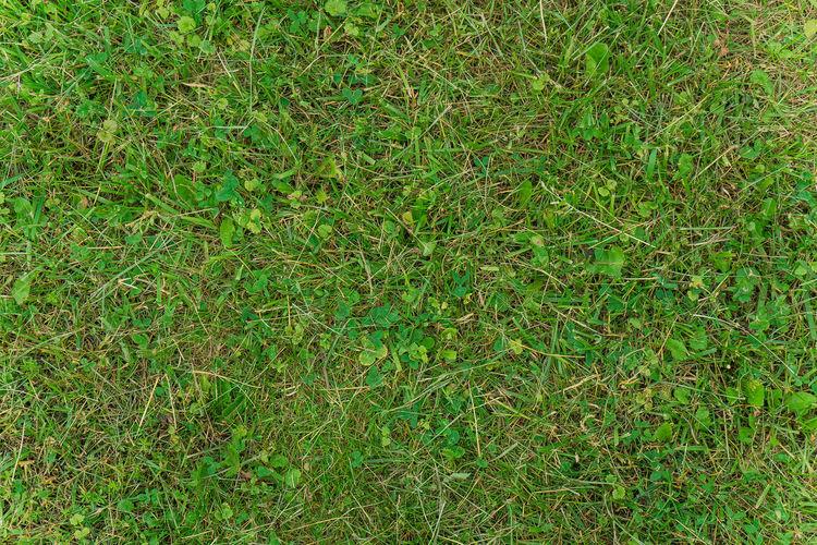 Full frame shot of grass on land