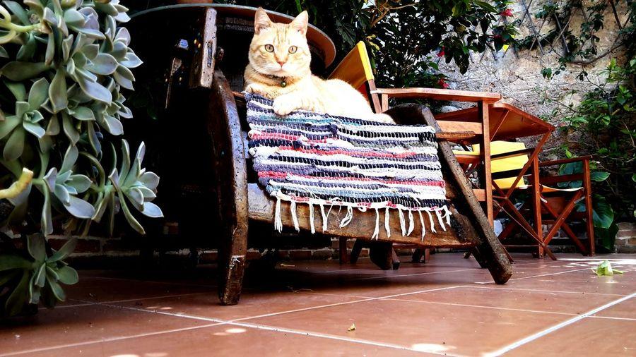 Cat♡ Cat Lovers 😻😻
