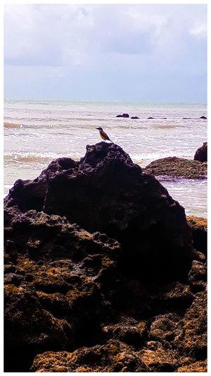 Pássaro ao mar
