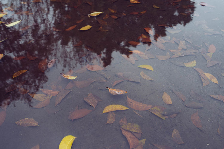 Dry leaves in calm water