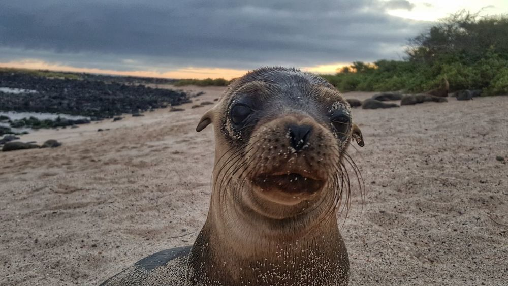 One Animal Sand Water Outdoors Pets Nature Mammal Beach Portrait Day Animal Themes No People Swimming Domestic Animals Close-up Sky Baby Sea Lion Nature Environment Environmental Conservation Fragility Social Issues
