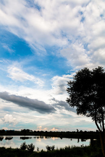 Silhouette of tree in the cloudy day. Background; Black; Blue Sky; Cloud - Sky Cloudy; Day Dusk; Evening; Field; Haze; Lake Landscape; Meadow; Nature No People Outdoors Scenics Silhouette; Sky Tranquil Scene Tranquility Tree Tropical; Water White Cloud;