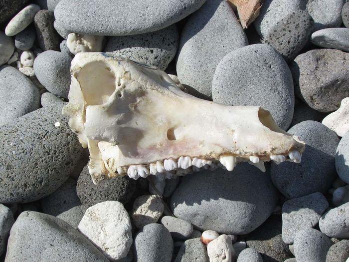 Philippines Batanes Stone Skull Bones