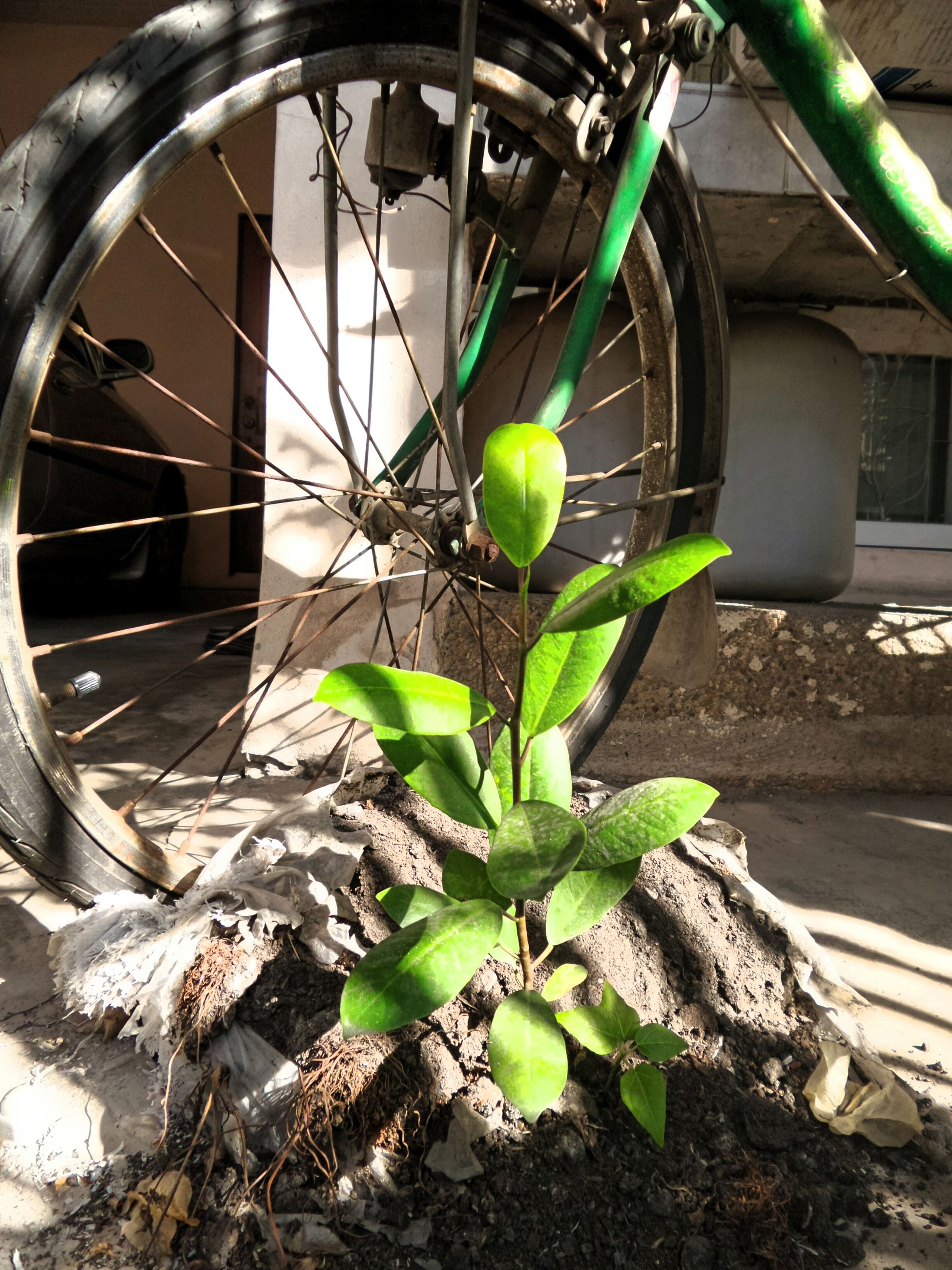 plant, built structure, wheel, architecture, growth, green color, transportation, building exterior, day, front or back yard, potted plant, close-up, no people, outdoors, bicycle, leaf, abandoned, wall - building feature, sunlight, street